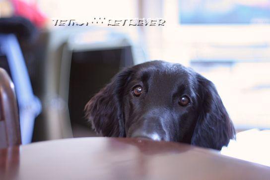 KAI-TAI-TETO-GOO∴∵RETRIEVER カイタイテトグゥ【故に何故ならば】レトリーバー-トラン