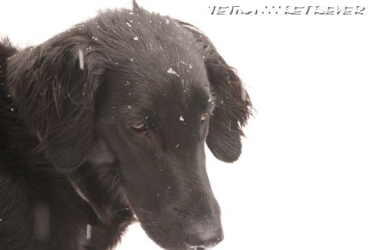 KAI-TAI-TETO-GOO∴∵RETRIEVER カイタイテトグゥ【故に何故ならば】レトリーバー-土曜