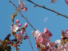 さばぽわ  深川 爆弾夫(バクダーリン)-花と月