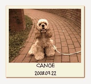 $A・コッカー『CANOE』のオヨダダクダクDIARY