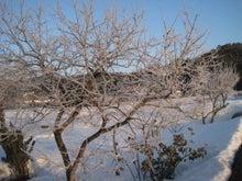 歩き人ふみの徒歩世界旅行 日本・台湾編-樹氷