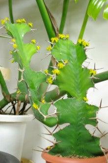 $植物屋ジャルのブログ