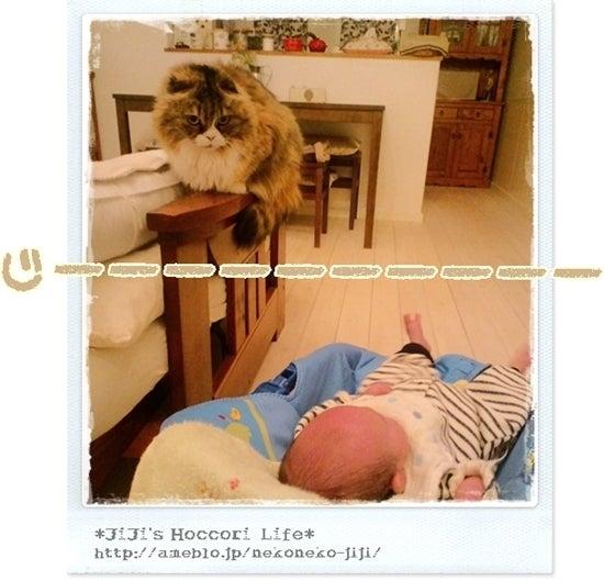 ×*×*JiJi's Hoccori Life*×*×