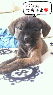 ミックス犬(柴犬×ボストンテリア) ミルモの日記-image0012.jpg