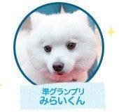 $『クヌート犬みらい&ポメラニアンLea の わんわんBLOG + α』