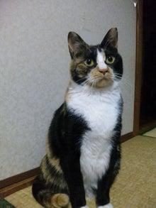 $溺愛猫のツレヅレ猫日記-110222_19393811.jpg