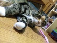 $溺愛猫のツレヅレ猫日記-110222_19390311.jpg