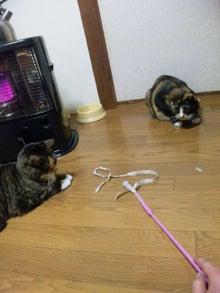 $溺愛猫のツレヅレ猫日記-110222_19483511.jpg