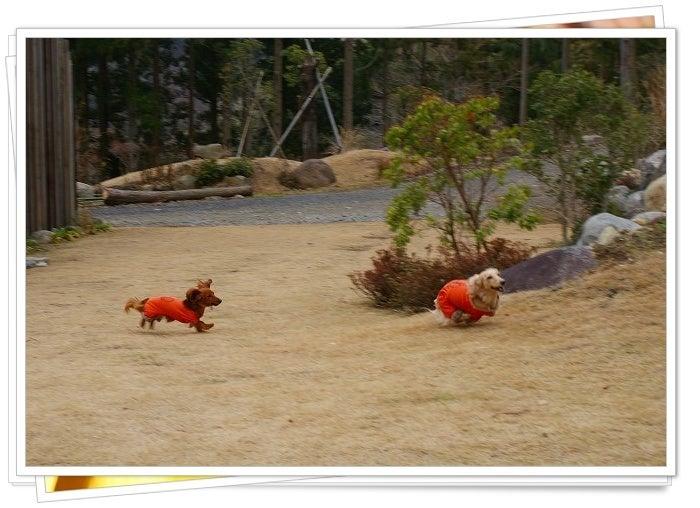 旅犬Lani&Leaのほほん風船記-ラン