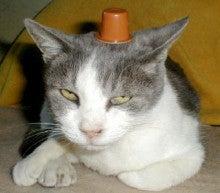 $迷子猫みっちゃんのブログ-milichan_osumasi_s