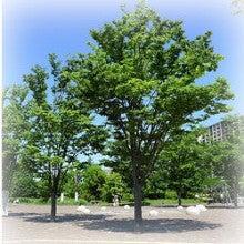 札幌市中央区の整体 カラダとココロが軽くなる「整体院えん」-新緑