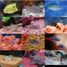 $札幌の熱帯魚専門店アクアフレンド北水