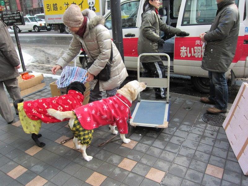 $盲導犬たちの活動・生活ブログ