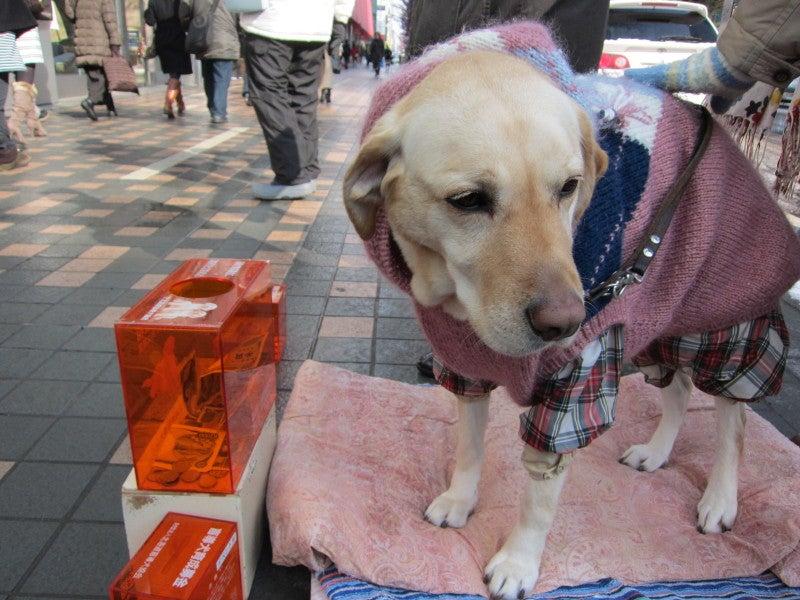 盲導犬たちの活動・生活ブログ