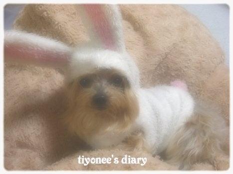 $★゚・:,tiyonee's diary・:,。☆