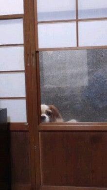 モグモグゴックン!-覗き犬