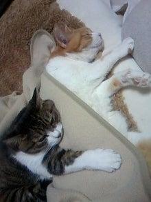 ずれずれブログ…湘南で猫と暮らせば…-110222_2351~02.jpg
