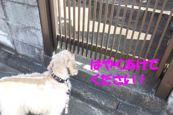 アメコカ☆小姫☆日記