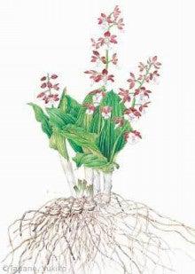 【こころのエステ&フィットネスジム】 ~貴方を内面から輝かせる愛 ~     聖書のことば・智 慧[EQサプリメント]-根と花