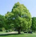 【こころのエステ&フィットネスジム】 ~貴方を内面から輝かせる愛 ~     聖書のことば・智 慧[EQサプリメント]-大きな木