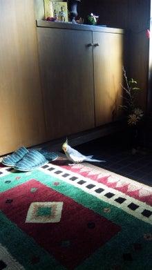 オカメインコのももちゃんと花教室と旅日記-110303_094135.jpg