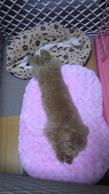 愛犬シェリーとシトラスとシフォンの日常-110303_2357~01.jpg