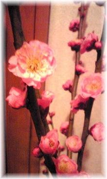 momo* clover-Image083.jpg