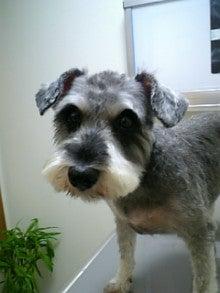 ペットの「がん」 ―レオどうぶつ病院腫瘍科―-初診時