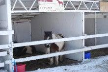 ゆったんの厳選まるごと北海道♪-動物はいますが世話がされてるんでしょうか・・・