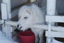 ゆったんの厳選まるごと北海道♪-動物たちも可哀想ですね・・・