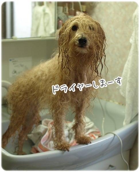 ★ パピプー家族と他4犬種 =8わんころ達 ★