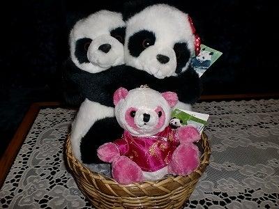 $北京大学に短期留学をしました。-パンダ夫婦