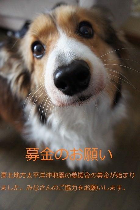 パッしおん!のブログ