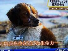 被災地動物情報のブログ