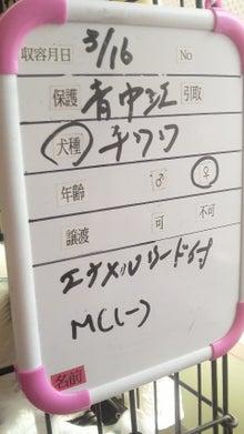 福のボンボン日記-2011031813340000.jpg