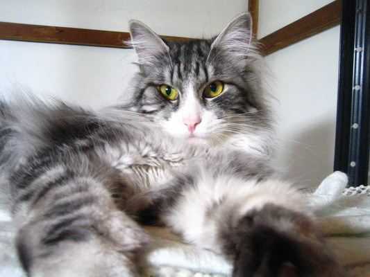 渡夢太郎家の猫