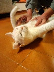 荻野琢真オフィシャルブログ Powered by Ameba-CA3H04930001.jpg