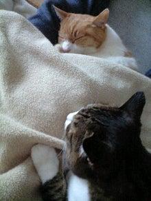 ずれずれブログ…湘南で猫と暮らせば…-110326_1638~0001.jpg