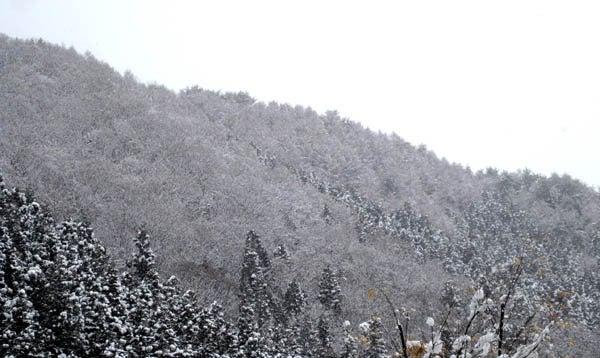 みなかみ雪だるまパーティーのblog-雪3/27
