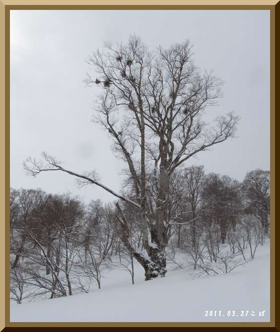 ロフトで綴る山と山スキー-0327_1017