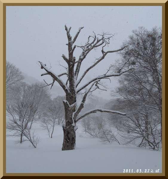 ロフトで綴る山と山スキー-0327_1003