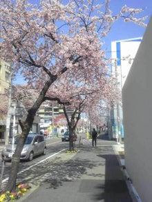 名古屋発!進学塾の塾長が新しい教育環境を提案します。自力学習と中学受験-桜
