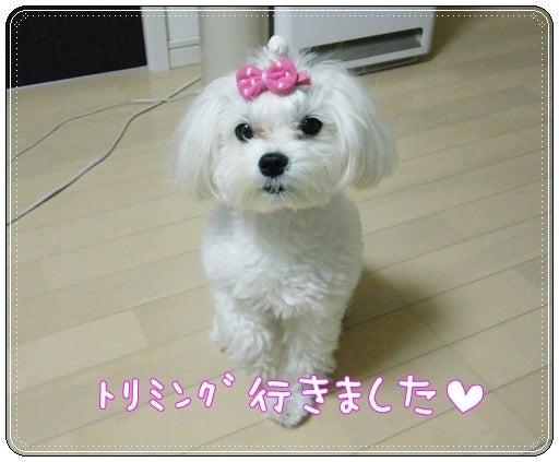 +fu-u **+ふぅ日記**
