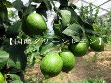 $皮まで食べられる奇跡のレモンをあなたに届けたい!大分県 喜屋のブログ