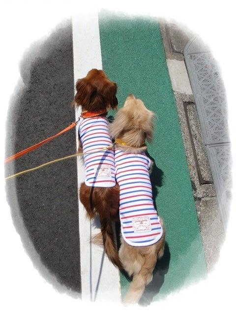 旅犬Lani&Leaのほほん風船記-自由が丘散歩