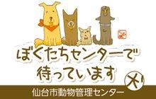 仙台市保護犬情報