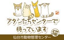 仙台市保護猫情報