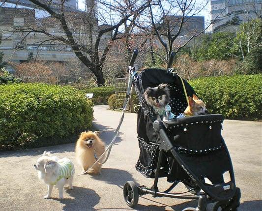 漫画家の犬たち-お散歩