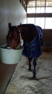 藤岡佑介 オフィシャルブログ 「馬に願いを」 Powered by Ameba-110329_074538.jpg