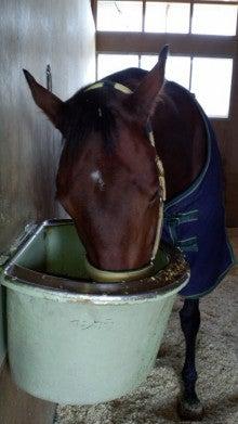 藤岡佑介 オフィシャルブログ 「馬に願いを」 Powered by Ameba-110329_074522.jpg